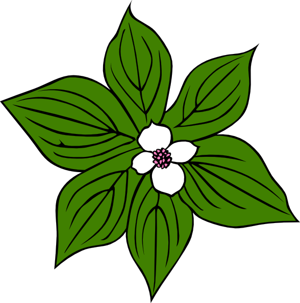 Cornus Canadensis Clip Art at Clker.com.