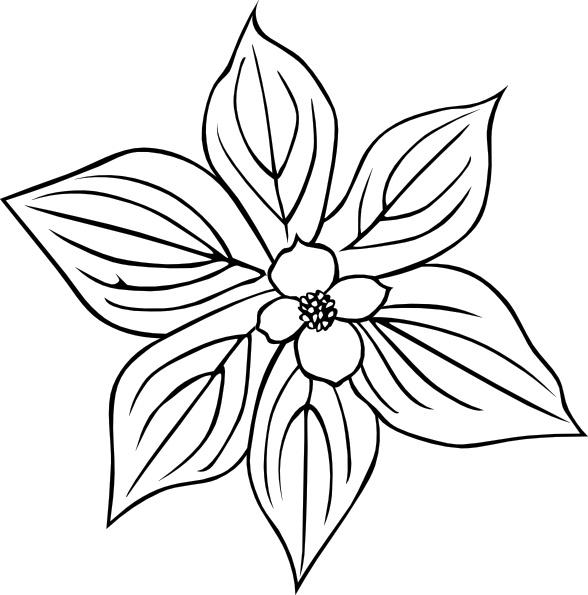 Gg Cornus Canadensis Outline clip art Free vector in Open office.