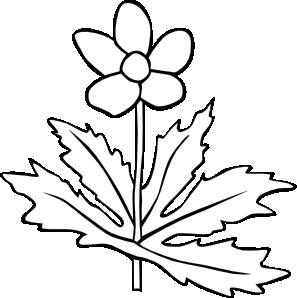 Gg Anemone Canadensis Outline Clip Art at Clker.com.