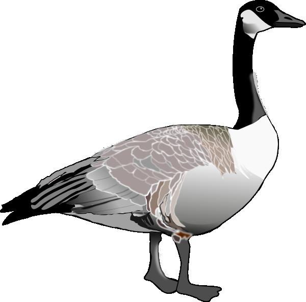 Canadian Goose Clip Art at Clker.com.