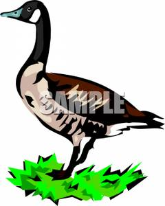 Goose In Grass.
