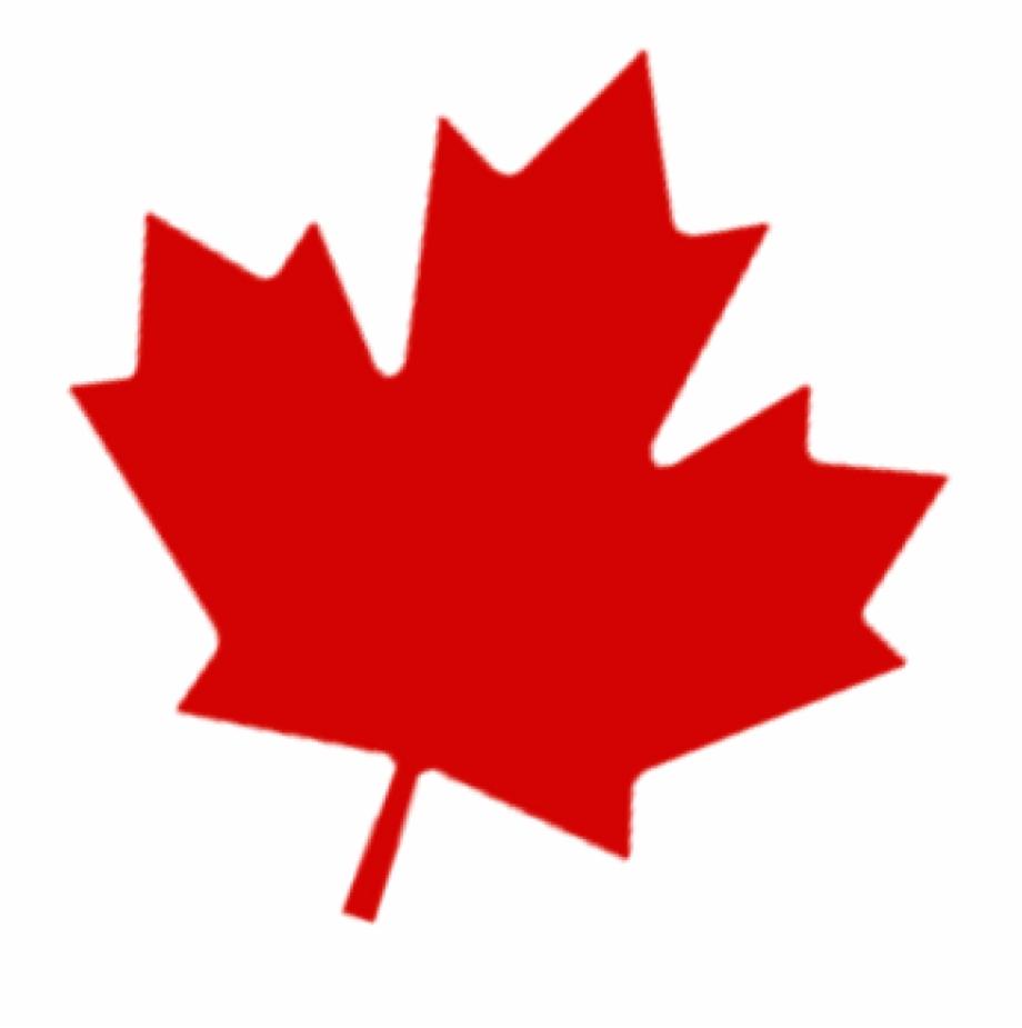 Canadian Leaf Png.