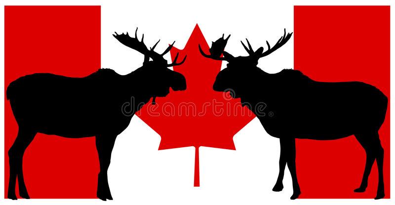 Canadian Moose Stock Illustrations.
