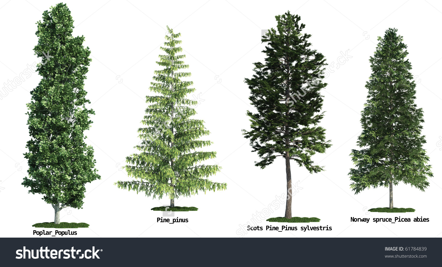 Set Four Trees Isolated Against Pure Stock Illustration 61784839.