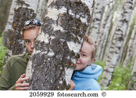 Poplar tree Stock Photos and Images. 4,417 poplar tree pictures.
