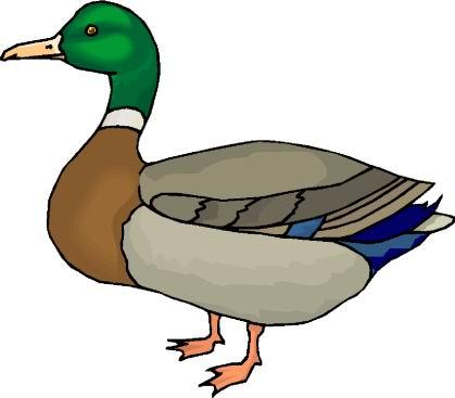 Farm Duck Clipart.