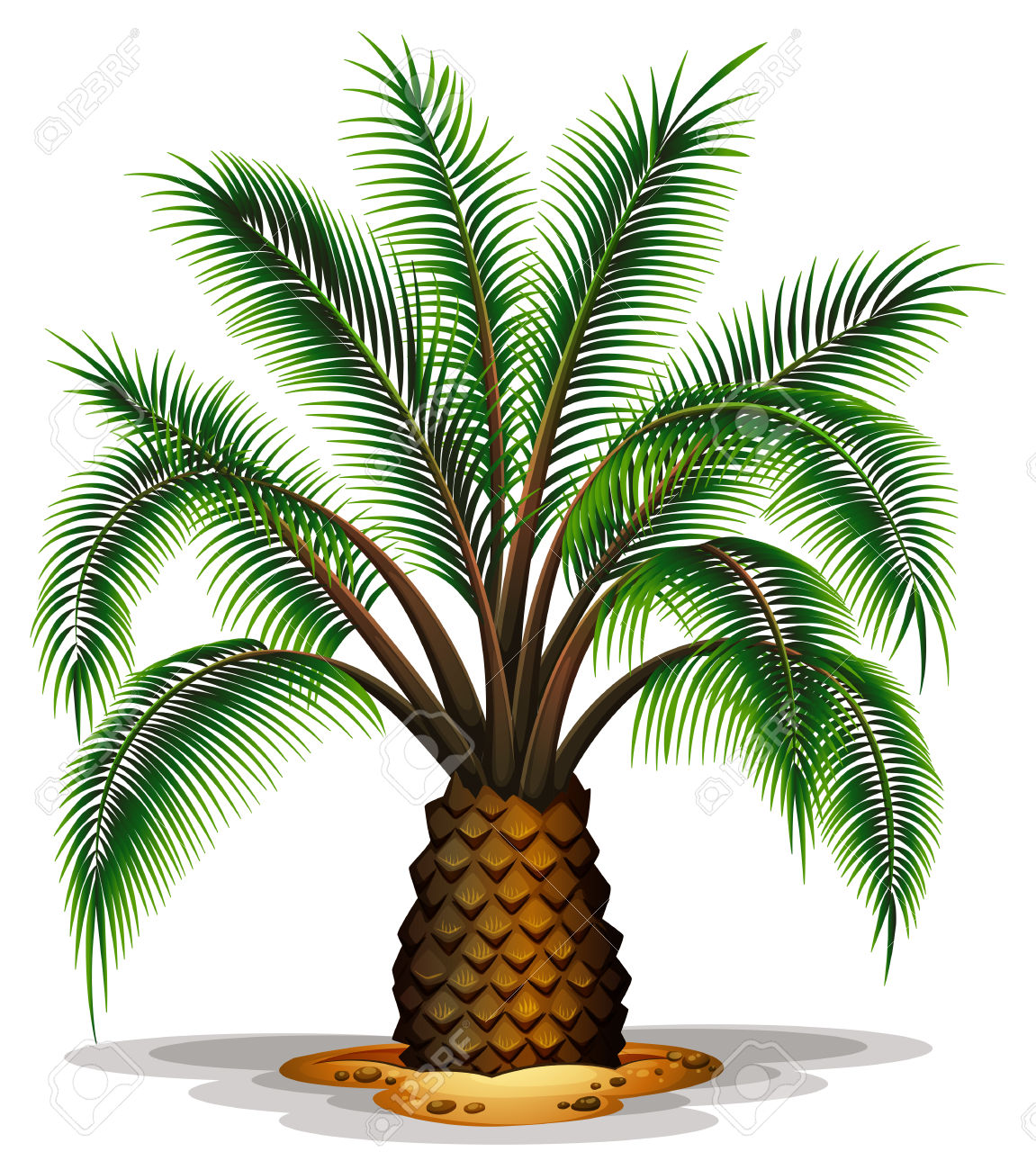 Illustration Of The Phoenix Canariensis On A White Background.