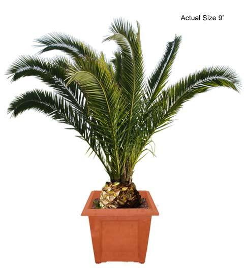 Bluendi: palm tree clipart.