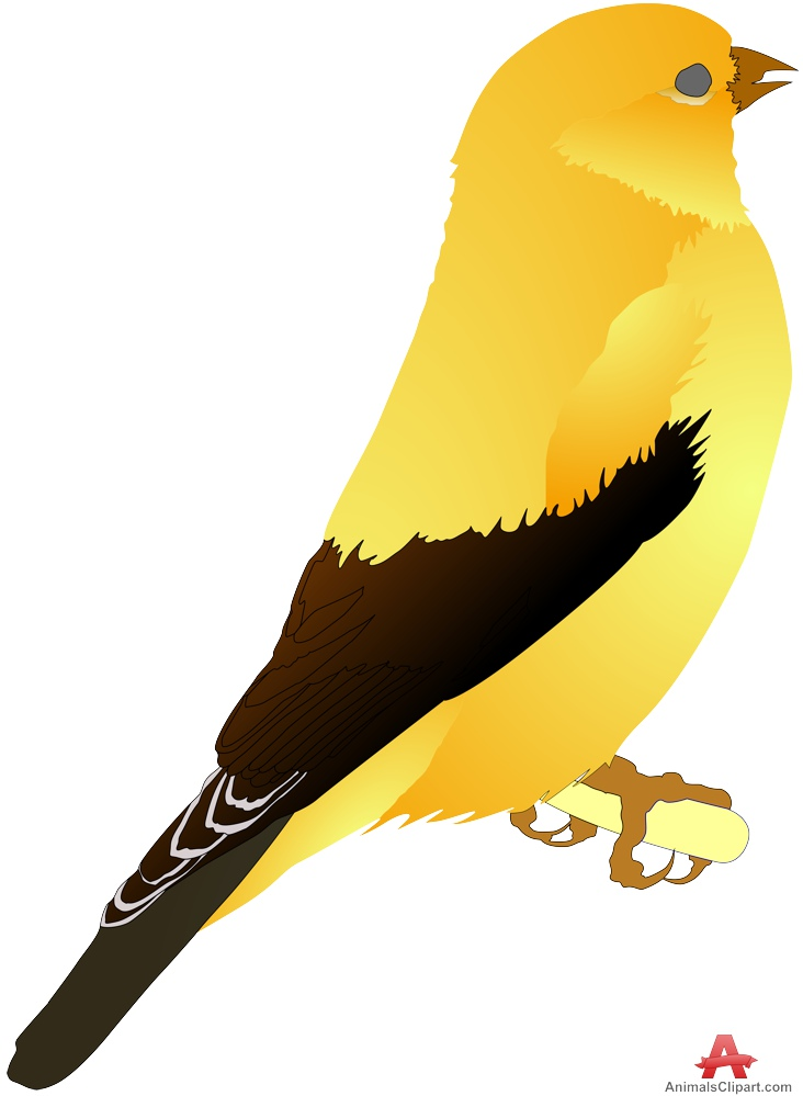 Free Canary Cliparts, Download Free Clip Art, Free Clip Art.