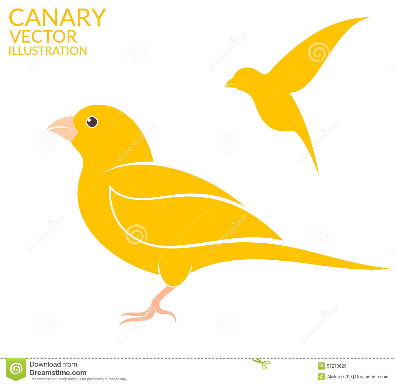 Canary Stock Illustrations.