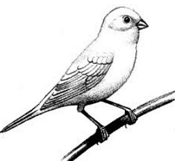 Canary Clipart.