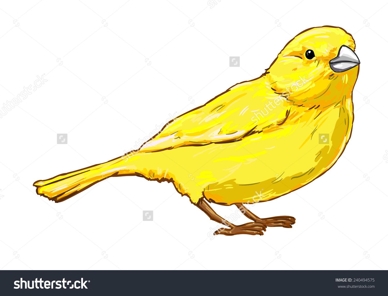 Canary Bird Vector Illustration Gold Stock Vector 240494575.