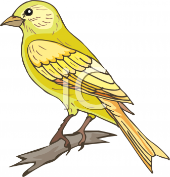 Canary clip art free.