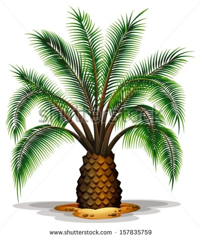 Canary Island Date Palm Stock Vectors & Vector Clip Art.