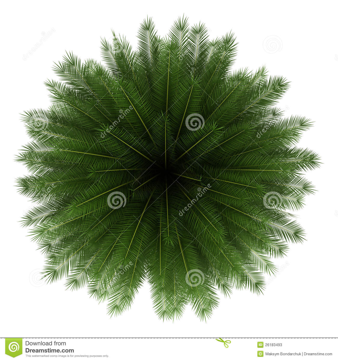 Top View Of Canary Island Date Palm Tree Isolated Stock Photos.