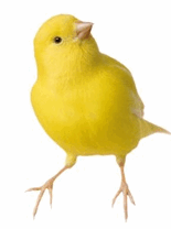 What's a Chrome Canary?.