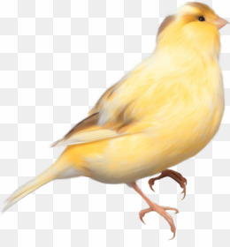Canary PNG & Canary Transparent Clipart Free Download.