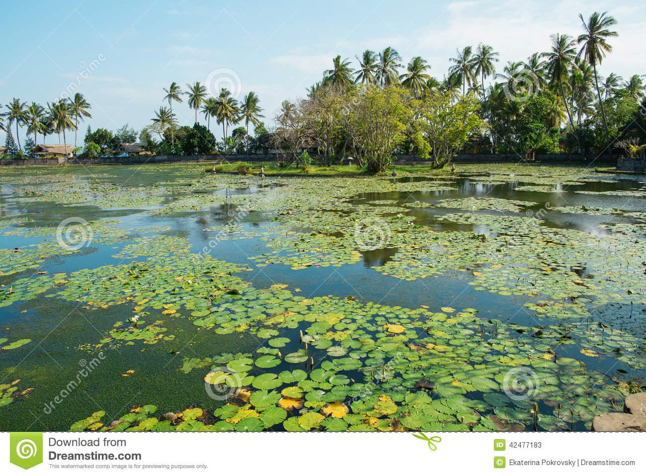 Beautiful Lotus Lagoon In Candidasa, Bali Stock Photo.