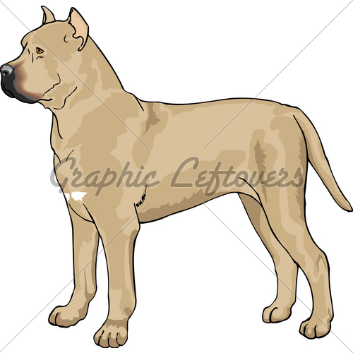 Cane Corso Pup · GL Stock Images.
