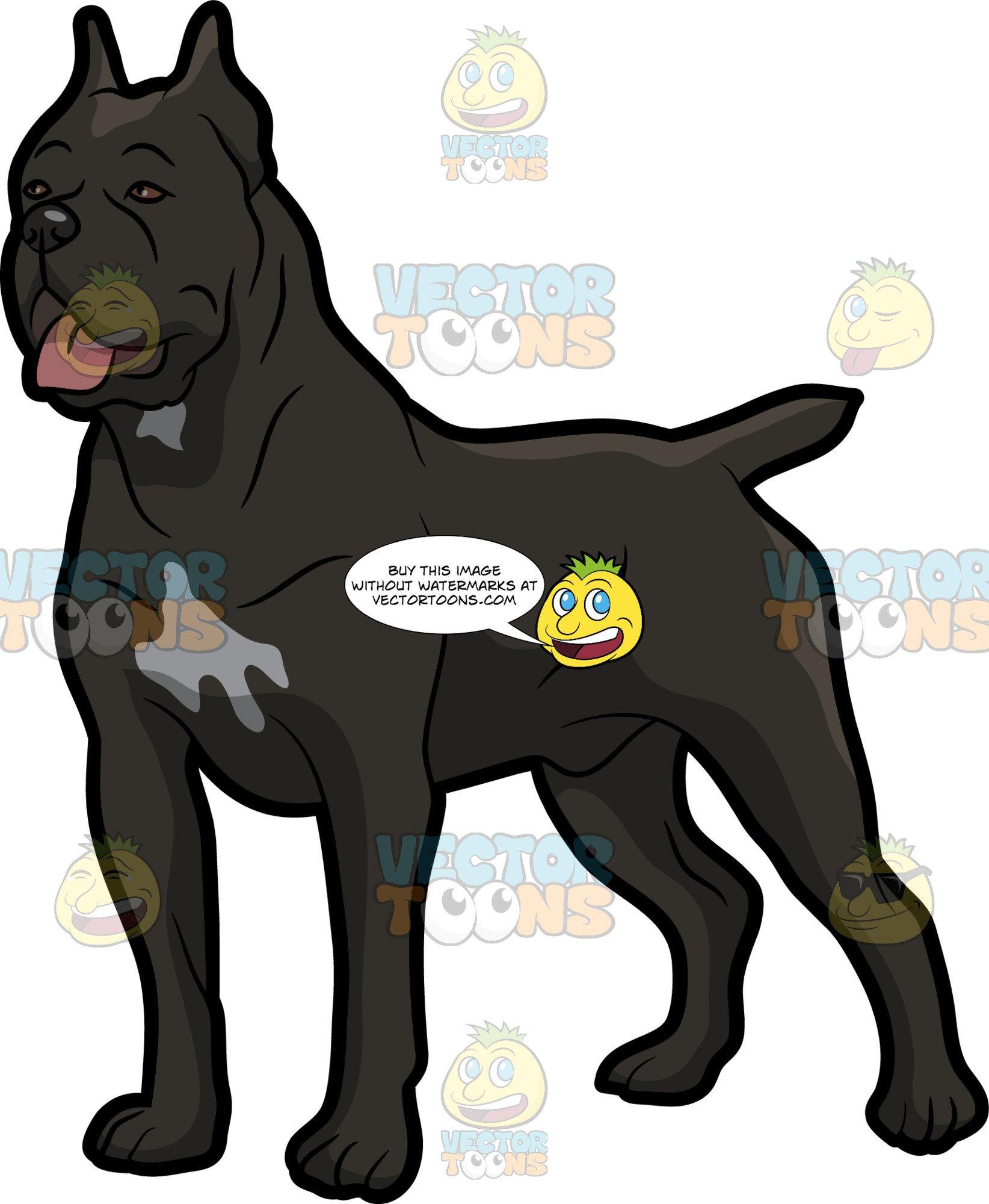 A Cane Corso Dog With A Nice Stance.