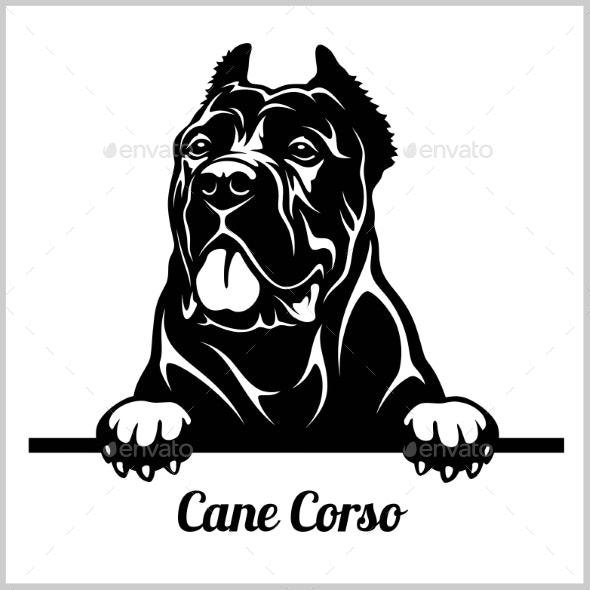Cane Corso Peeking Dog.