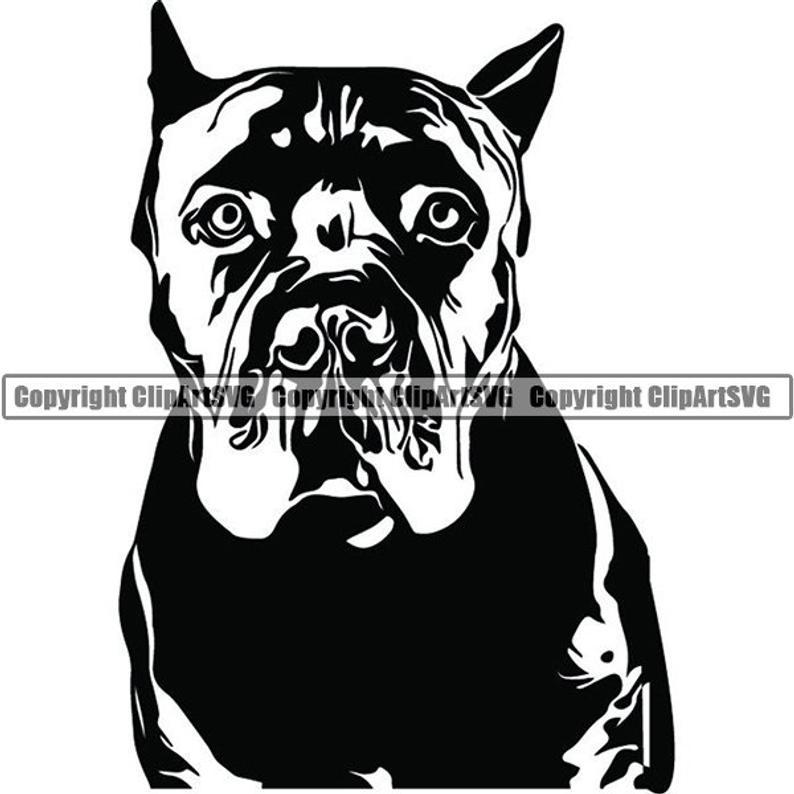 Cane Corso #2 Dog Breed Italian Mastiff K.