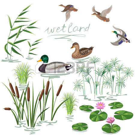 24,453 Duck Stock Illustrations, Cliparts And Royalty Free Duck.