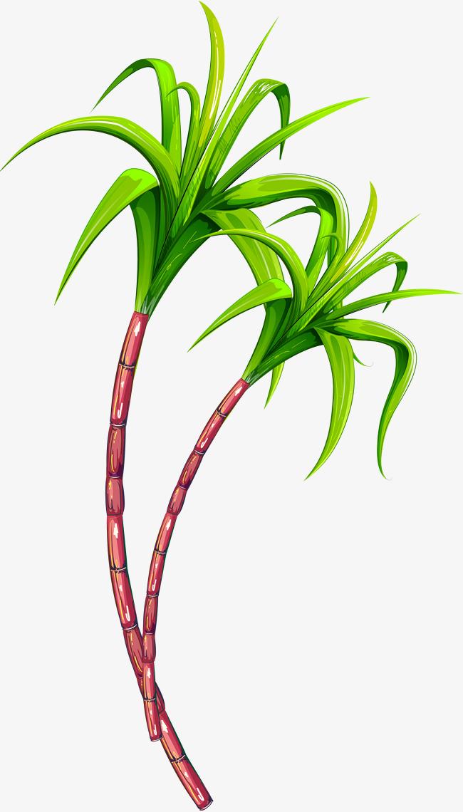 Sugar Cane PNG Images.