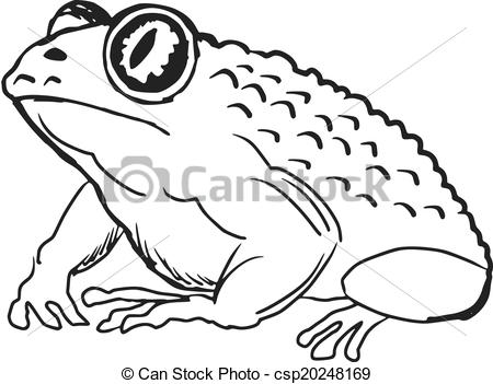 Toad Stock Photo Images. 15,416 Toad royalty free pictures and.