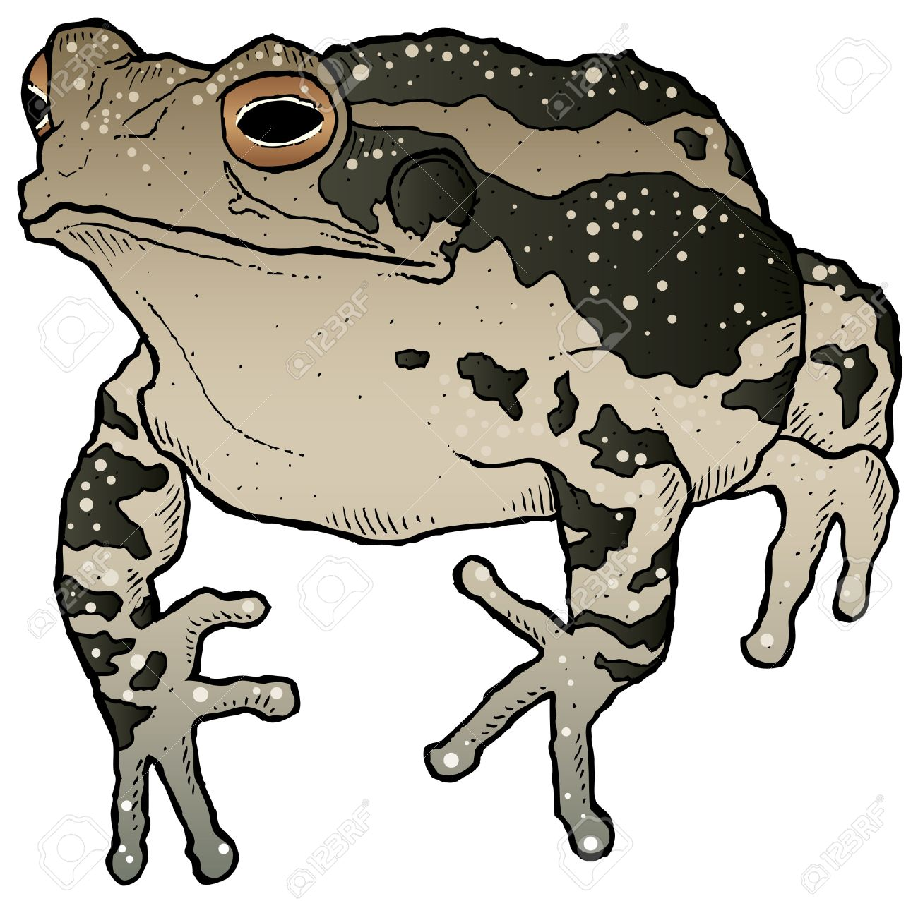 Toad clipart.