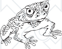 Clipart Black And White Cane Toad.