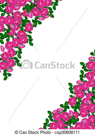 Clipart of Dog rose (Rosa canina) flowers on a white background.
