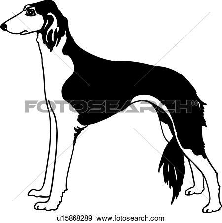Clip Art of , animal, breeds, canine, dog, saluki, show dog.