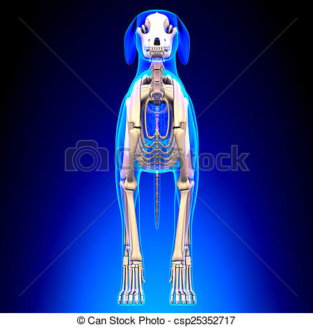 Stock Photography of Dog Skeleton.