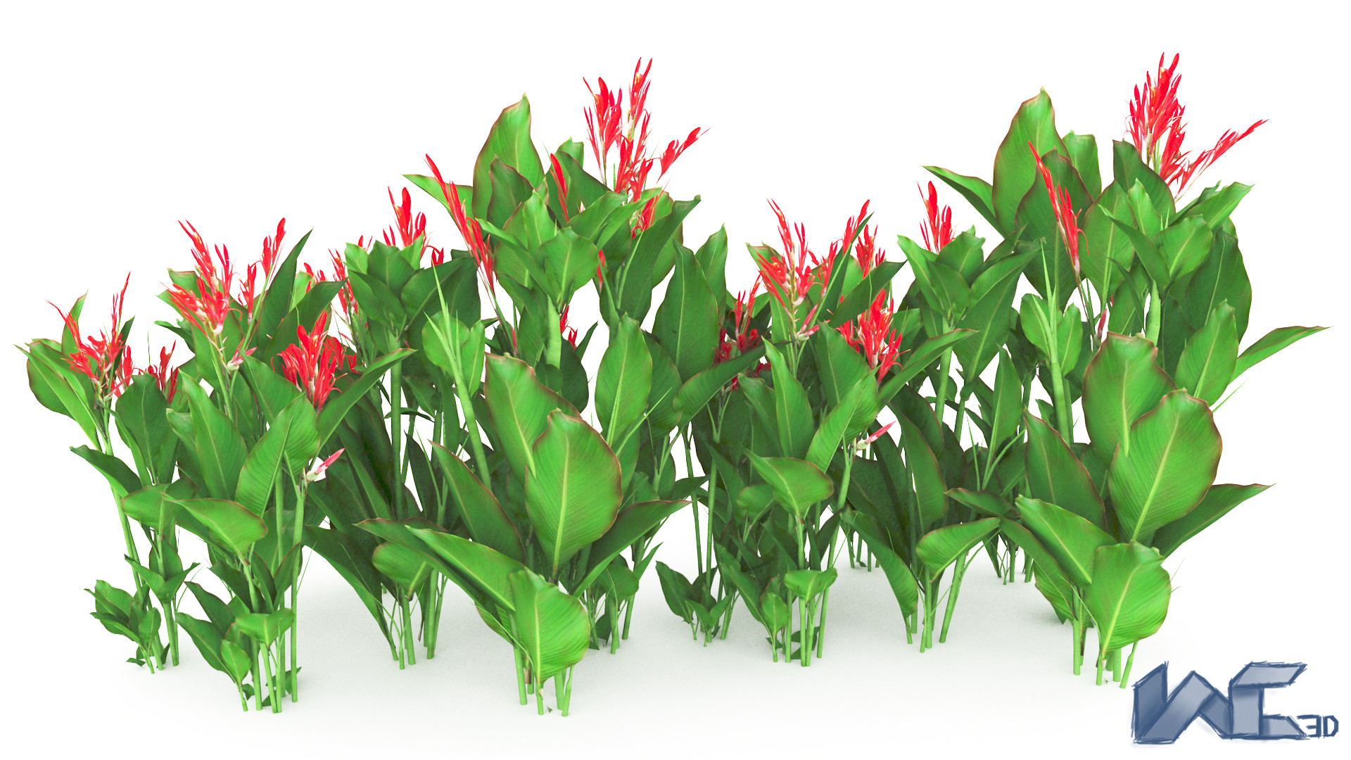 Searched 3d models for Canna indica.