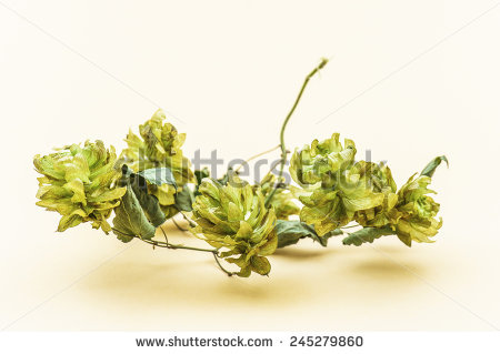 Cannabaceae Stock Photos, Royalty.