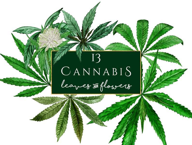Cannabis Clipart, watercolor marijuana clipart, marihuana clip art,  cannabis Sativa clipart, Watercolor Cannabis Sativa, hemp, weed clipart.