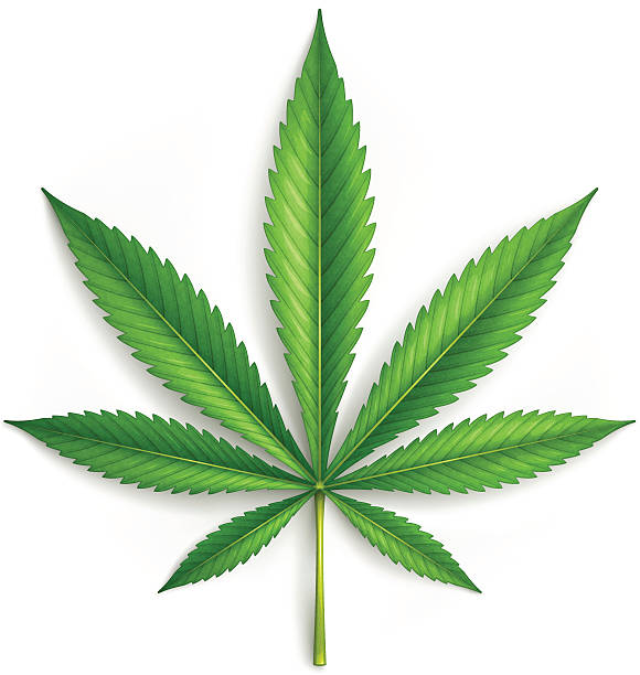 Best Marijuana Illustrations, Royalty.