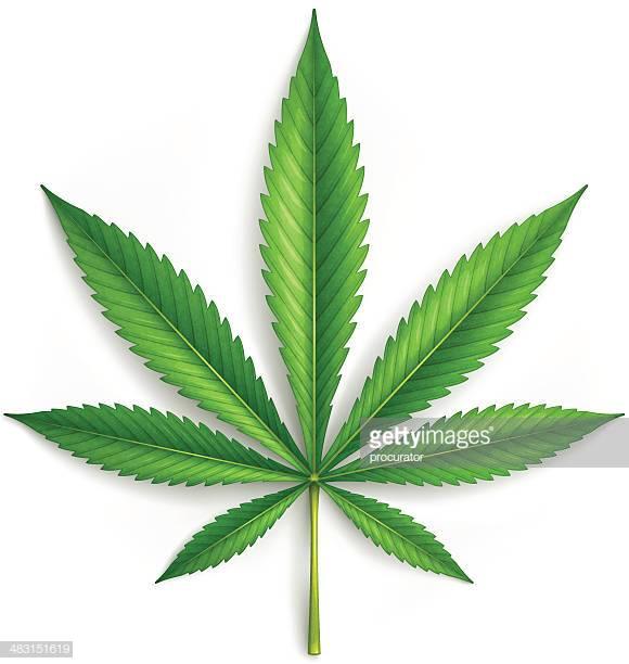 60 Top Cannabis Plant Stock Illustrations, Clip art, Cartoons.