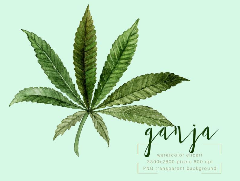 Weed Watercolor Clipart, Marijuana Clipart, Marihuana Clip Art, Cannabis  Sativa Clip Art, Watercolor Cannabis Sativa, ganja, Marijuana.