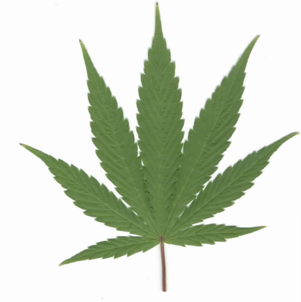 Free Marijuana Leaf Clip Art.