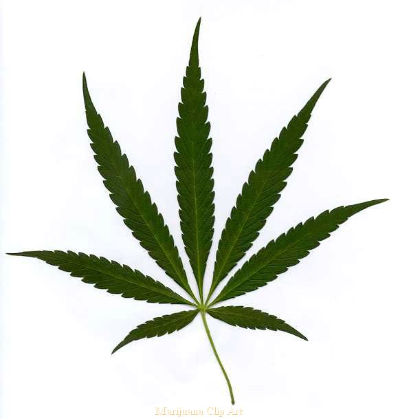 Cannabis Marijuana Leaf Clipart.