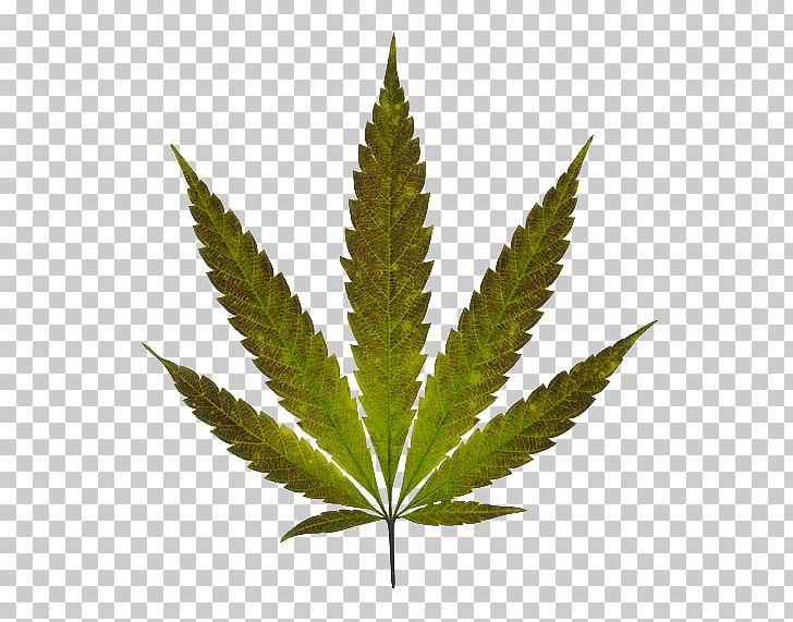 Marijuana Cannabis Leaf PNG, Clipart, Cannabis, Cannabis In Papua.