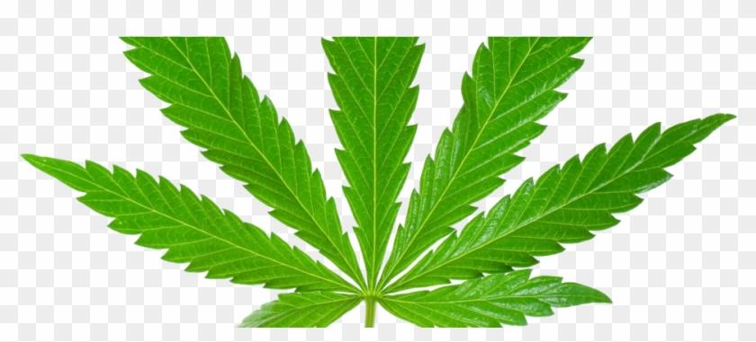 Weed Leaf Png.