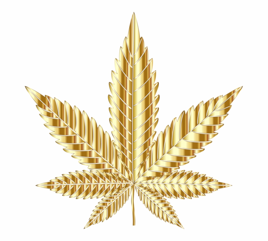 Cannabis Sativa Drawing Medical Cannabis Learn About.