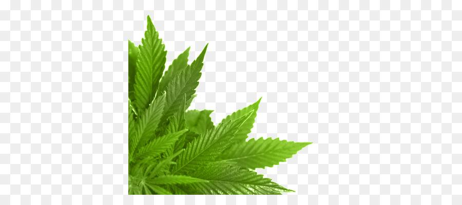 Cannabis Leaf Backgroundtransparent png image & clipart free download.