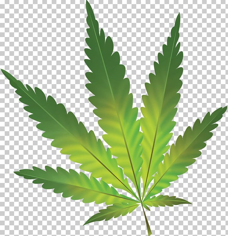 The Other Guys Medical Cannabis Cannabis Sativa Cannabis Smoking PNG.