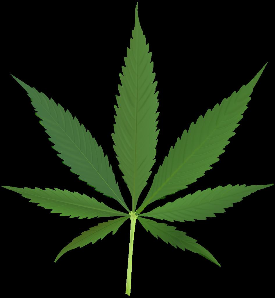 File:Cannabis leaf 2.svg.