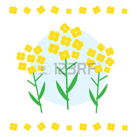 114 Canola Stock Vector Illustration And Royalty Free Canola Clipart.