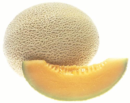 Cantaloupe Clip Art Download.